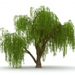 Funky Art with Weeping Willow Tree Wall Decals
